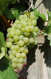 Winery_Domaine-de-Chaberton